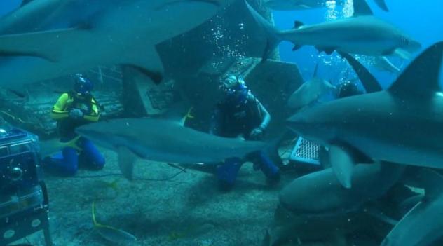 与鲨鱼一起游泳:在虚拟现实中体验姜哲的鲨鱼潜水