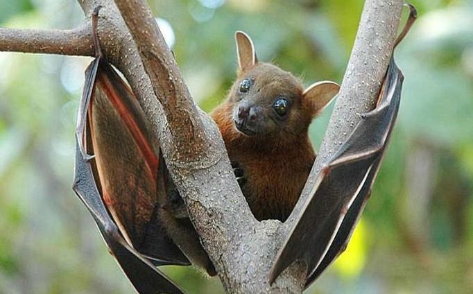 在安静的墨西哥城,稀有的蝙蝠出现了