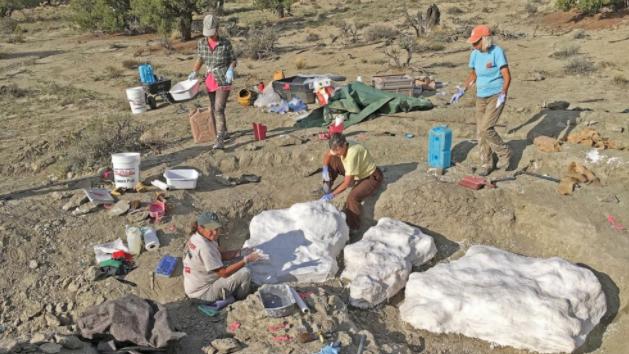 大量化石遗址可能证明暴龙群居